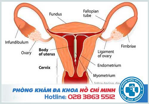 Đặt vòng tránh thai bị rong kinh phải làm sao?