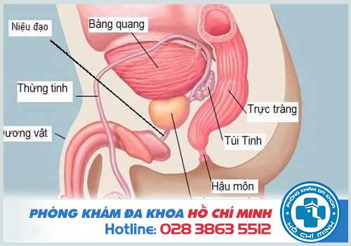 Điều trị viêm tuyến tiền liệt tại phòng khá nam khoa Hóc Môn