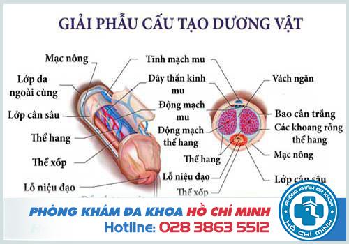 Phòng khám bộ phận sinh dục nam ở đâu uy tín tại TPHCM