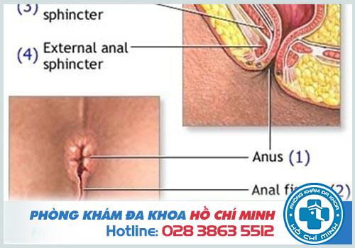 Triệu chứng dấu hiệu của nứt kẽ hậu môn là gì